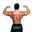 【コラム】筋肉は1ヶ月でどのくらい増えるか